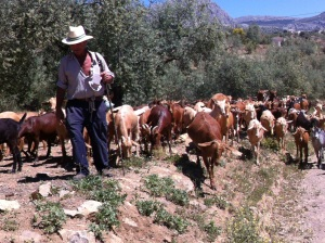 110-goats