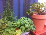 124-herbs2