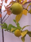124-lemons