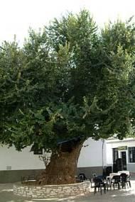 170-tree